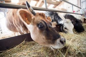 Ferme de Woimbey en Meuse visite de ferme avec les enfants